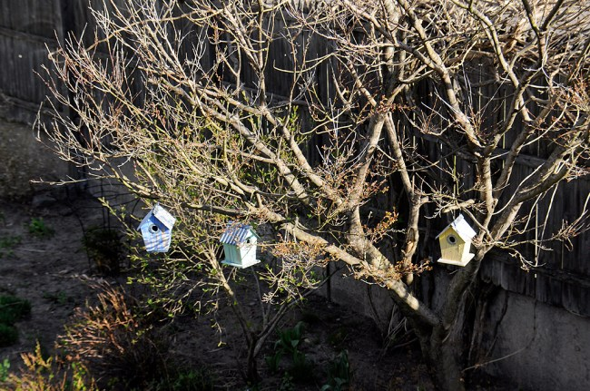 Birdhouses_All