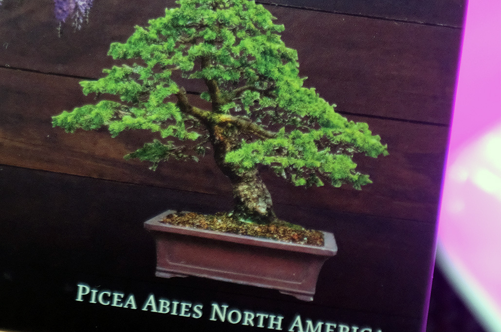 Planters Choice Bonsai Real Leaf Rainydaymagazine