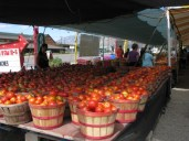 Tomatoes in Brigham City, Utah