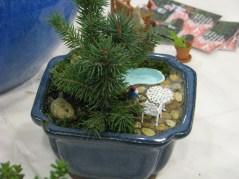 Dwarf conifers
