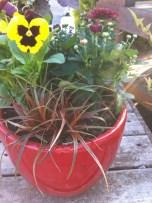 Pansies and Sedge