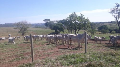 Polícia Civil recupera mais de 50 cabeças de gado furtadas na região de Catalão