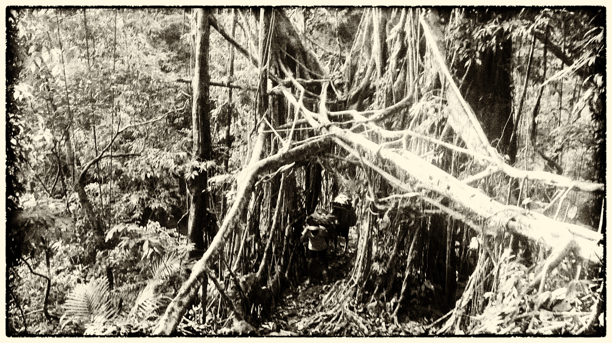 Kudeng Root Bridges (2) copy