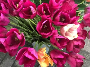 Silk tulips at Amsterdam's floating market
