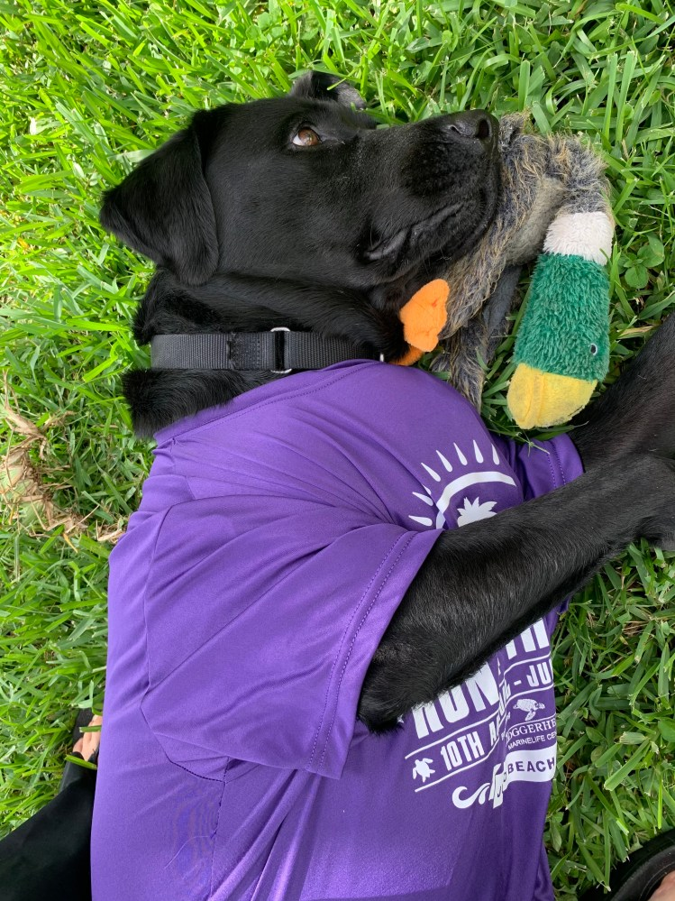 Our black Lab, Kumba, resting on his favorite stuffed toy as he models his Race 4 the Sea t-shirt