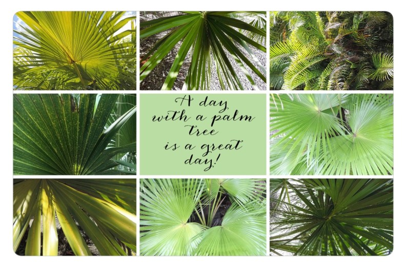 A day with a palm tree is a great day!