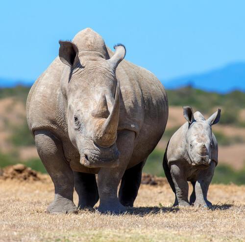 5-Day Rhinos, Murchison Falls & Kidepo Valley Adventure