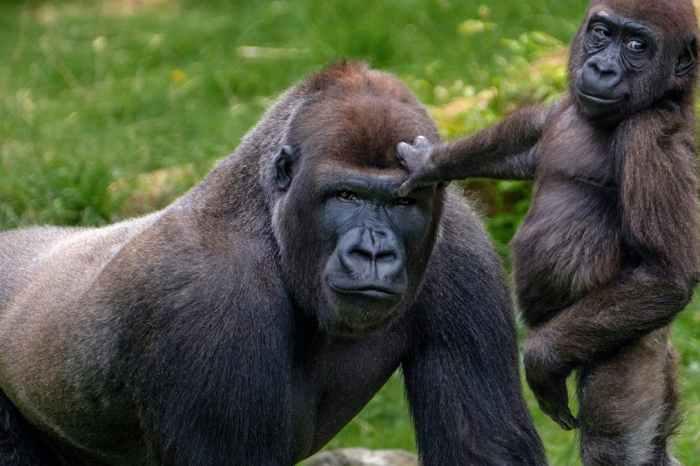 15-Day Big 5 Safari Gorilla , Chimp and Wildlife