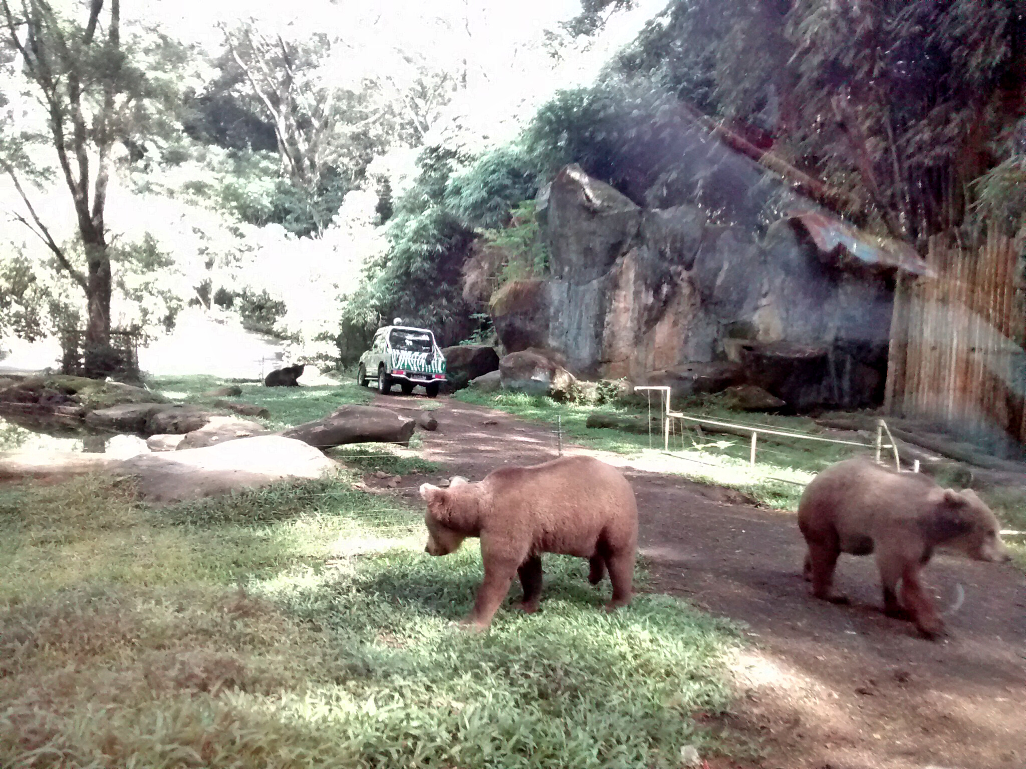 Lets Go Out Taman Safari Indonesia Raisharaihan