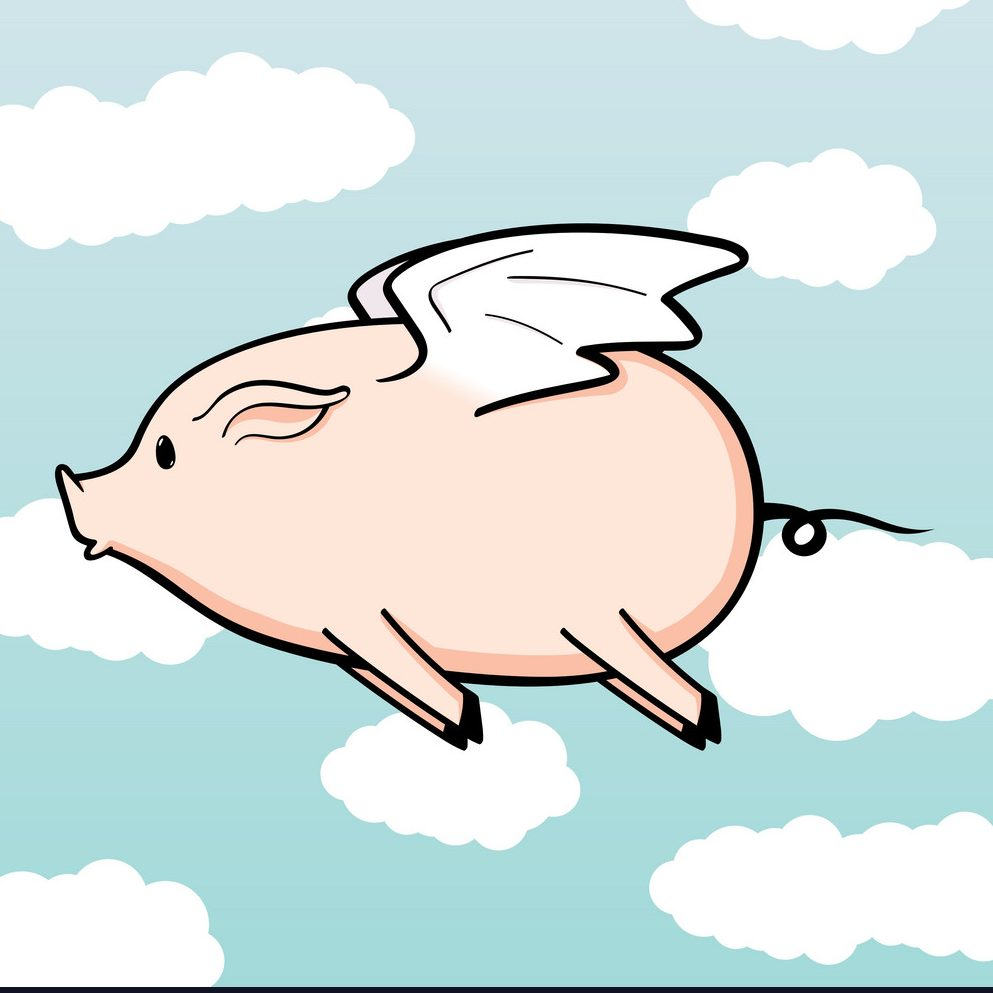 When pigs fly: the day my son's therapist apologized...