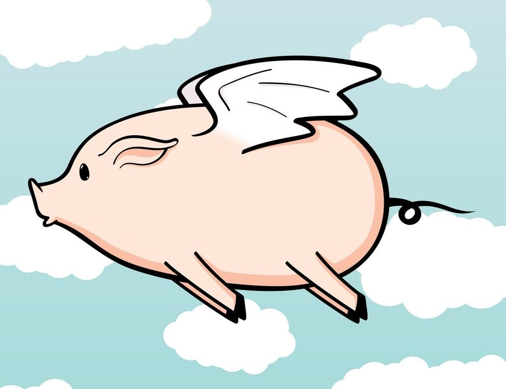When Pigs Fly The Day My Sons Therapist Apologized Raising Devon