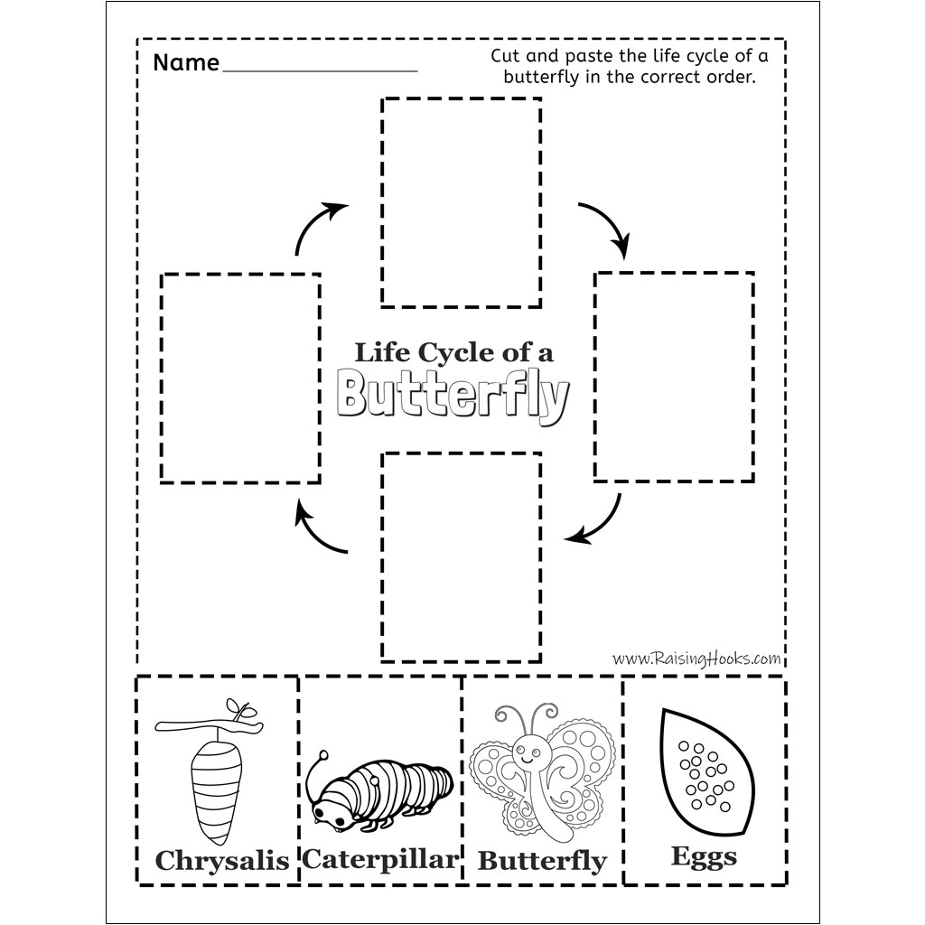 Butterfly Butterfly Life Cycle Worksheet Cut And Paste