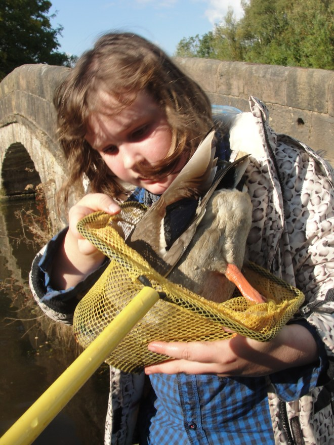 Rescuing The Duck