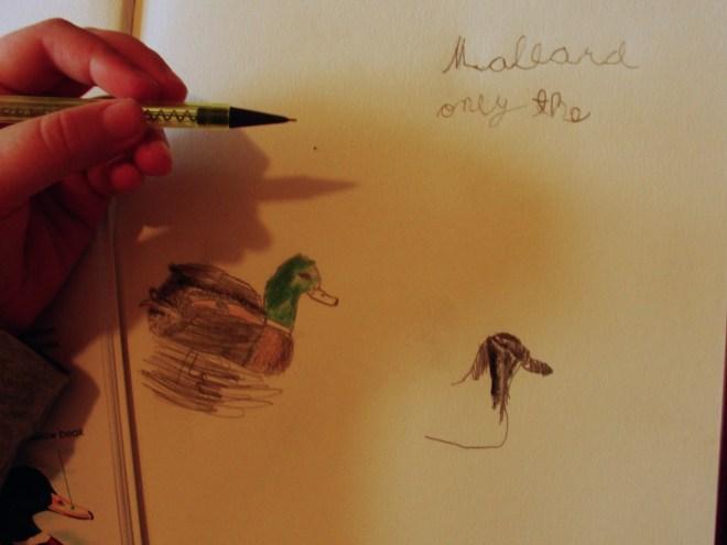 Rosie's Mallards