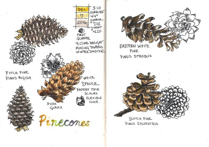 Pinecones 2.jpg