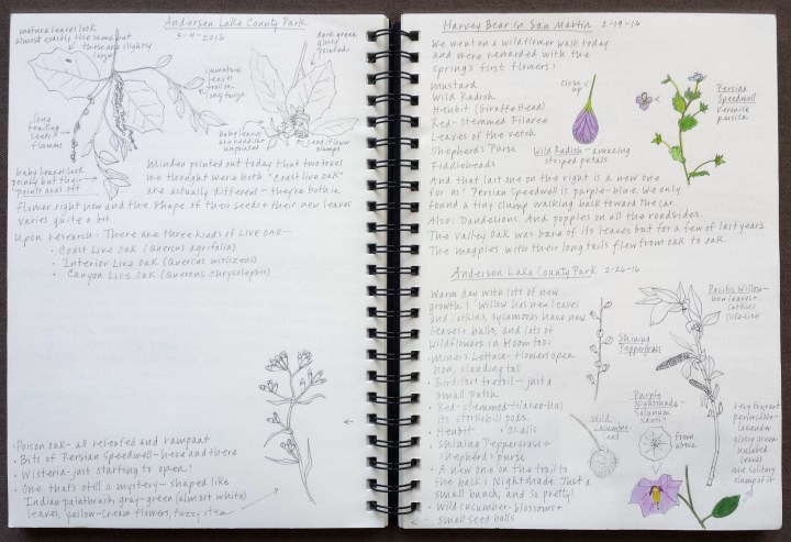 Keeping a nature journal here i took on a couple challenges from the laws guide to nature drawing and journaling with my kids in addition to my regular notes i did a comparison of solutioingenieria Images