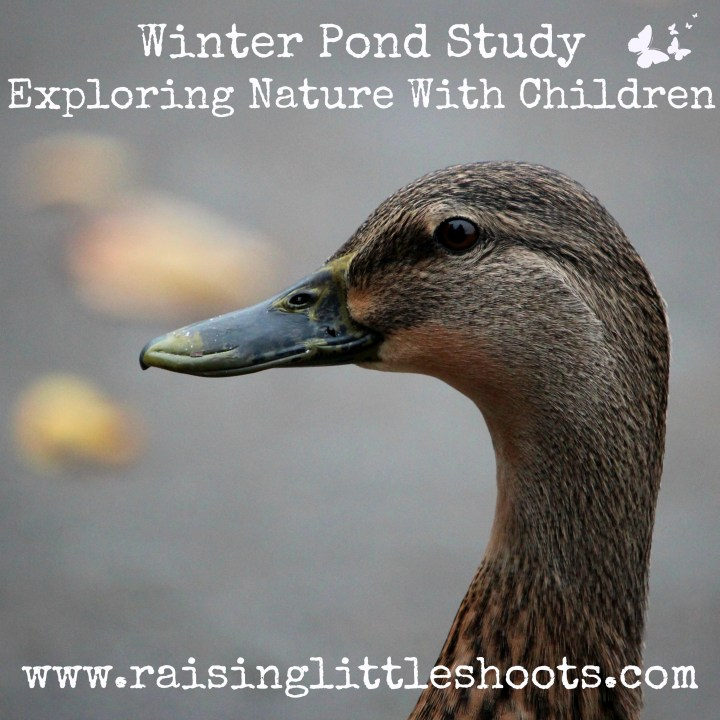 Winter Pond Study.jpg