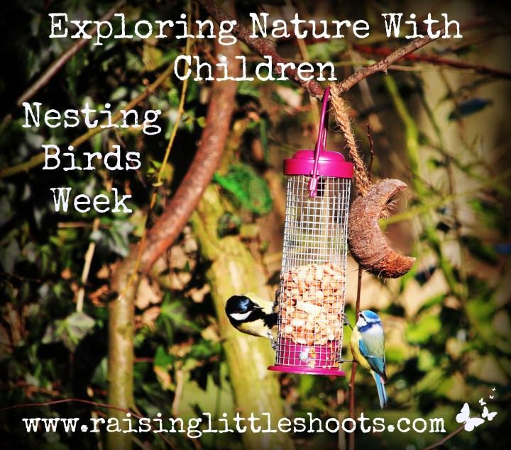 Nesting Birds week.jpg