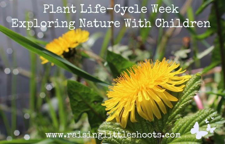 plant life cycle week