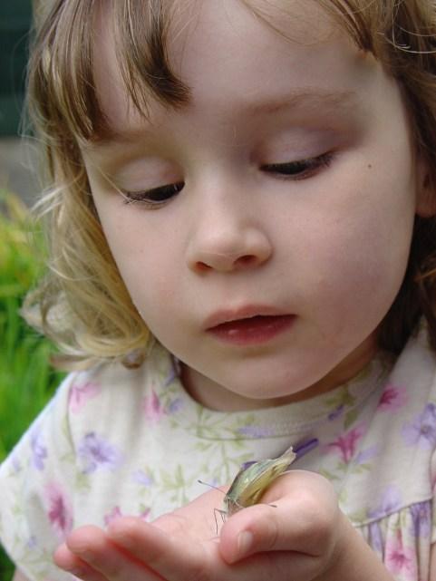 butterflies, garden 006.jpg