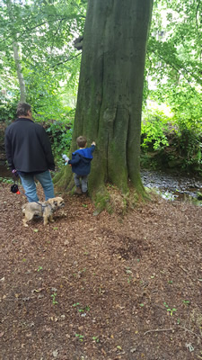 Camping with the kids - Holme Valley Camping and Caravan Park - Woodland Walk
