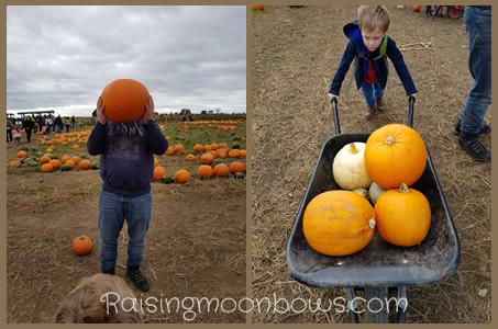 Farmer Copleys Pumpkin Festival - pumpkin picking