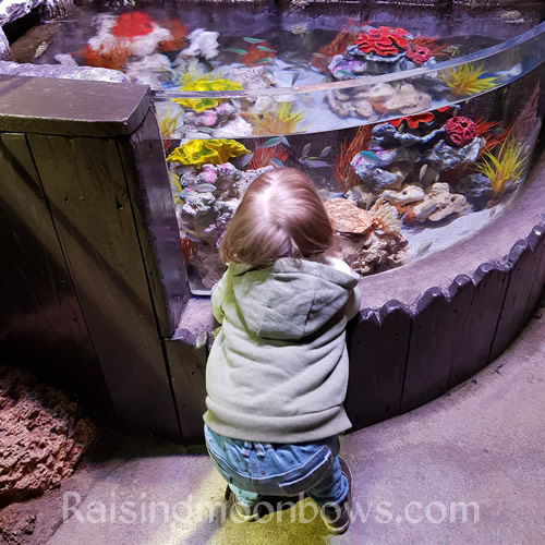 5 tips When Visiting Alton Towers sealife