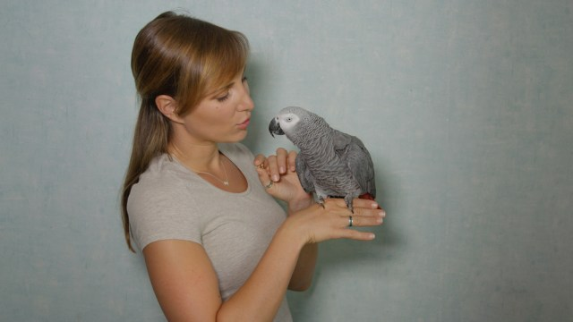 Can Parrots Have Conversations With Humans