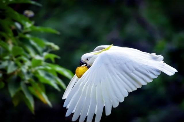 Why are Cockatoos so Destructive