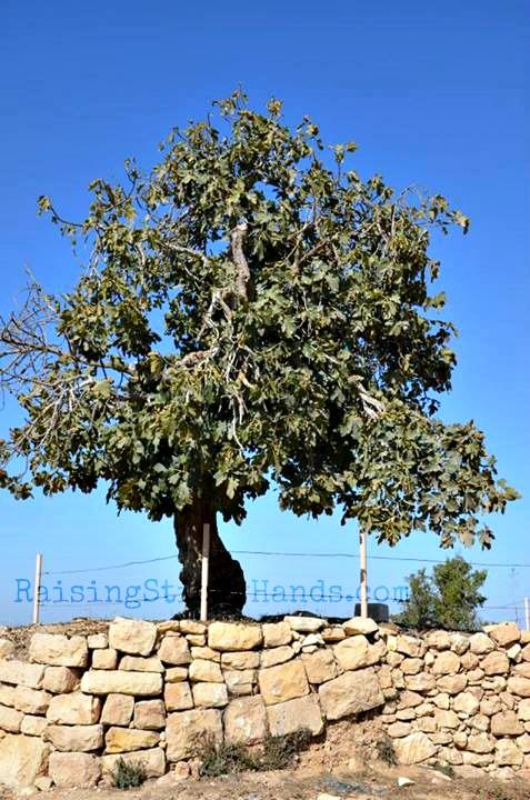 Tree - Hannah's Prayer