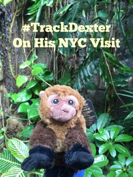 a Track Dexter