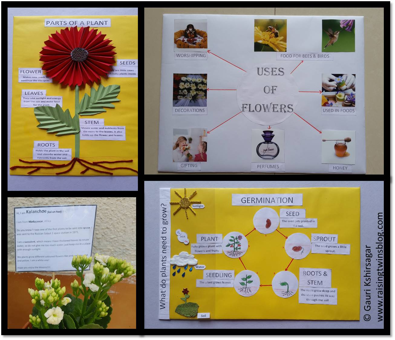 Raising twins also flowers and plants easy to make charts project ideas for rh raisingtwinsblog