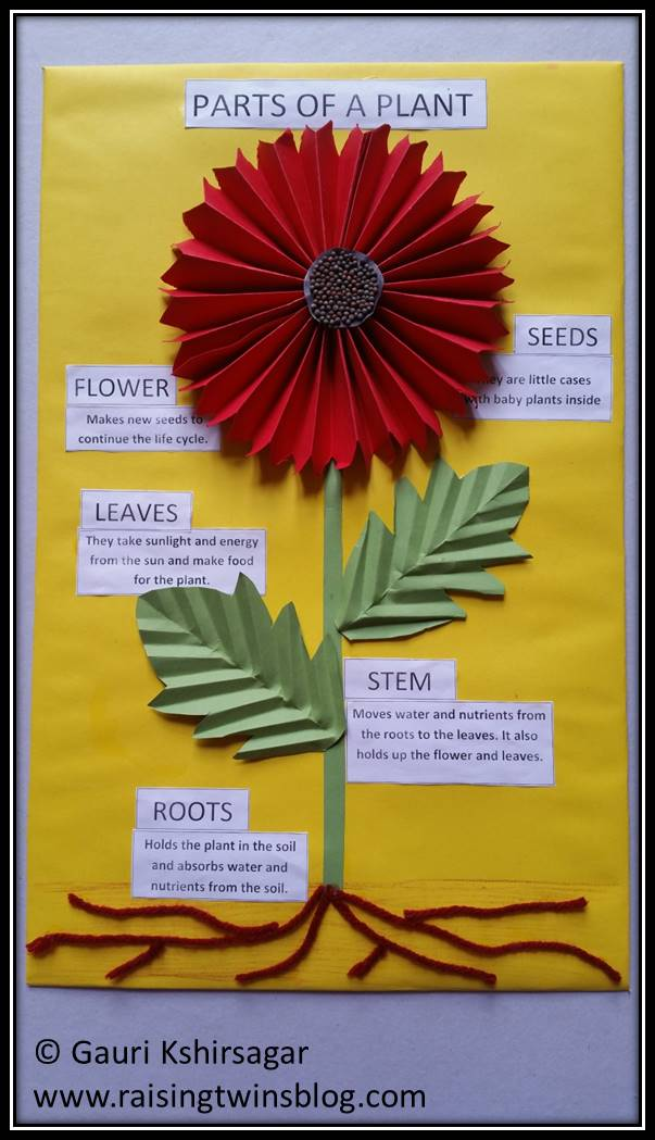 Chart also flowers and plants easy to make charts project ideas for rh raisingtwinsblog