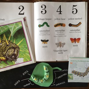 caterpillar butterfly unit study