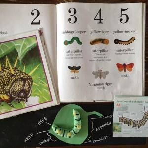 caterpillar butterfly unit study