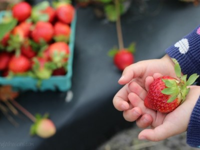 How to not pick strawberries