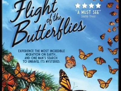 Free butterfly coloring sheets flight of the butterflies blu ray