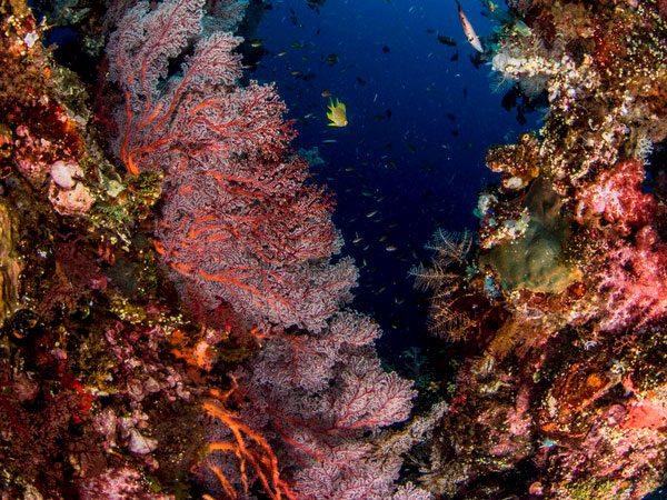 Batu Lima Unterwasserwelt - einzigartige Tauchplätze Raja Ampat