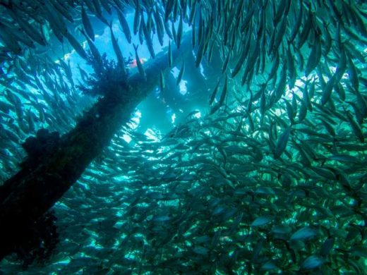 cross wreck raja ampat