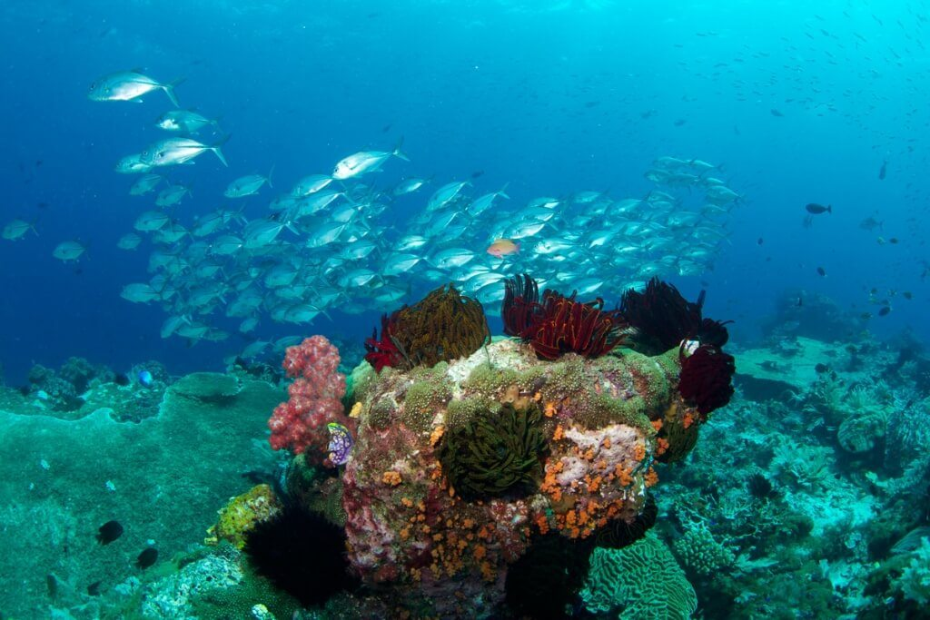 Diving Raja Ampat