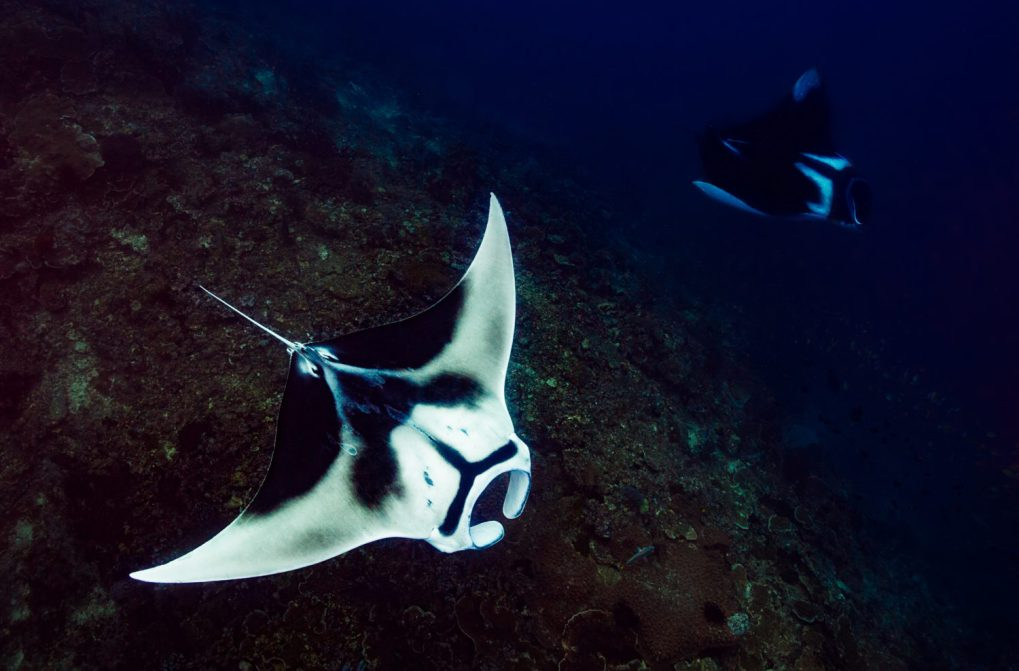 Raja Ampat Dive Sites - Manta Sandy