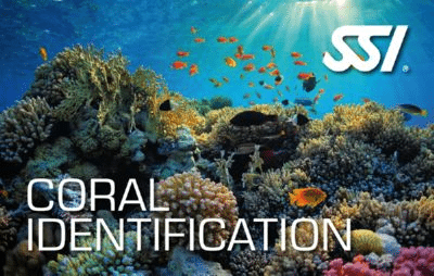ecology specialty programs - coral identification