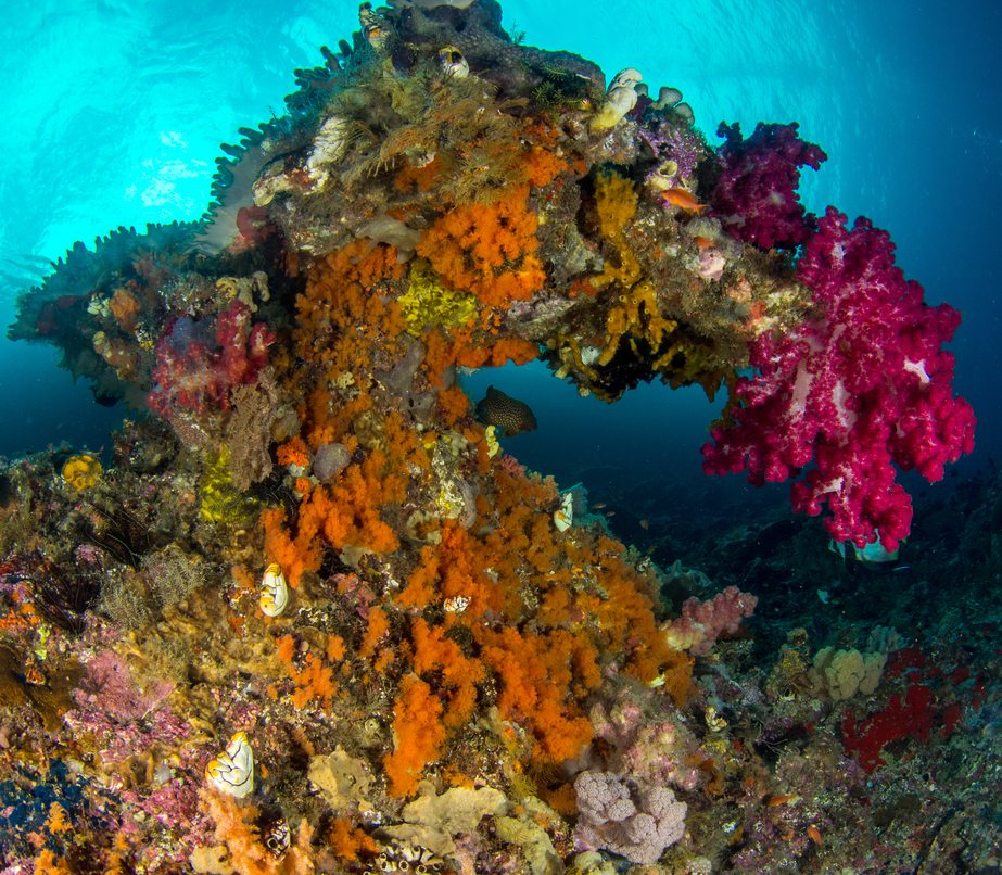 coral reefs information