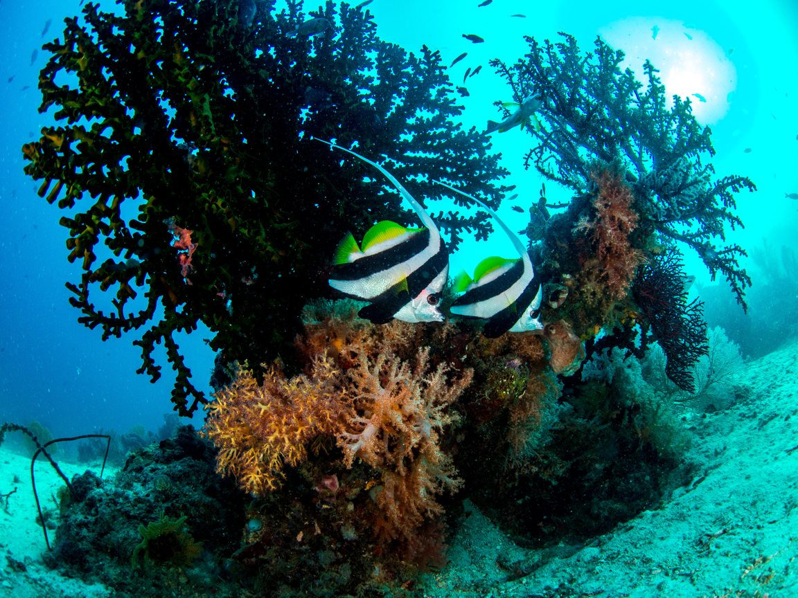 Top Corals And Coral Reefs Information