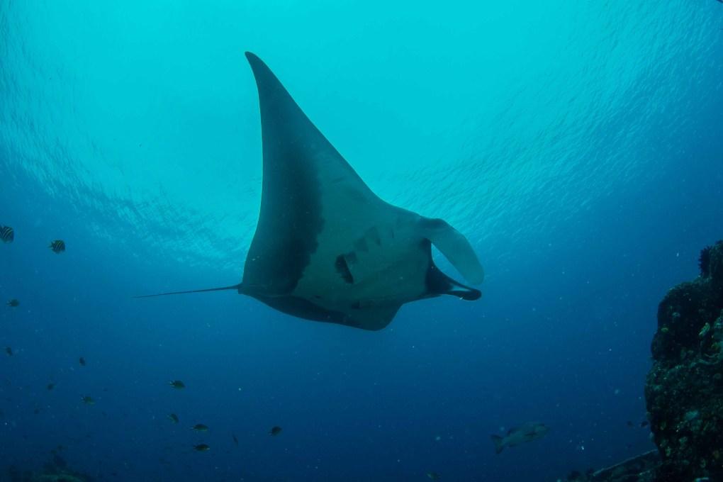 Teaching kids to dive - manta ray