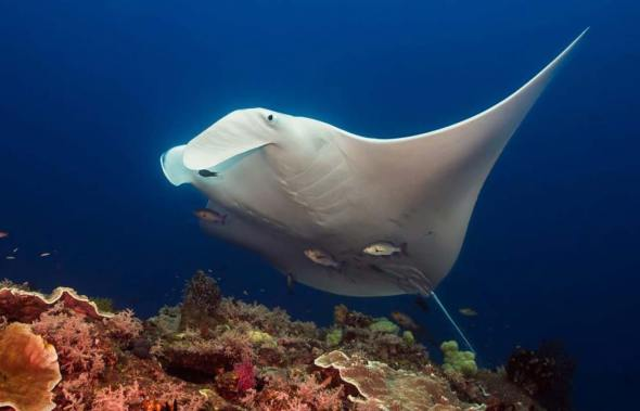 Top ten diving sites