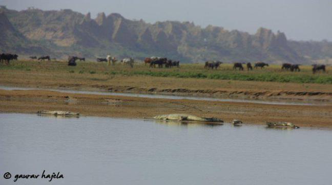 Chambal Safari in Dholpur