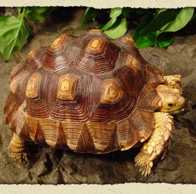 tortoise-1.jpg