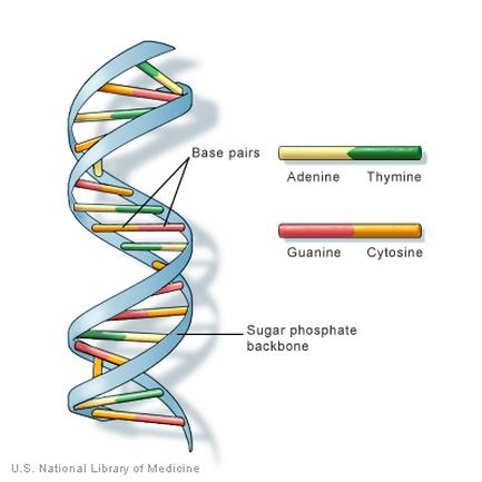 Chapter bio molecules also class chap rajkumar biology  guide for th  th cbse rh rajkumarbiology weebly