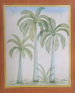 Group Palm Trees a007